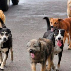 Mascotas, Dueños y Vías Públicas